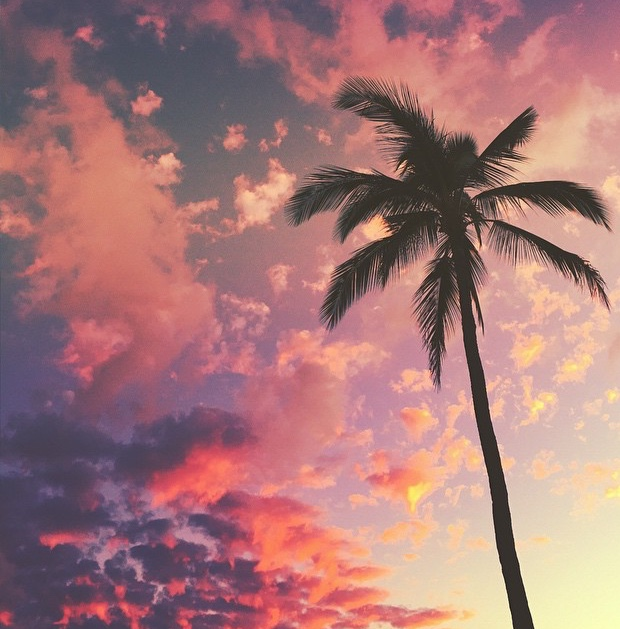 Hawaii-PalmPink.jpg