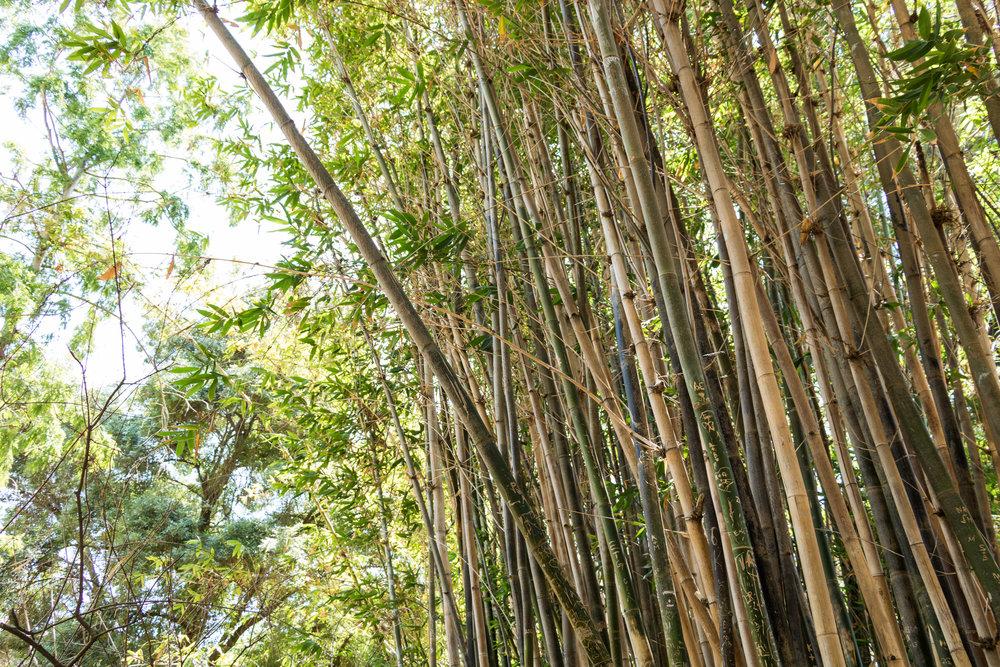 fullerton arboretum (12 of 77).jpg
