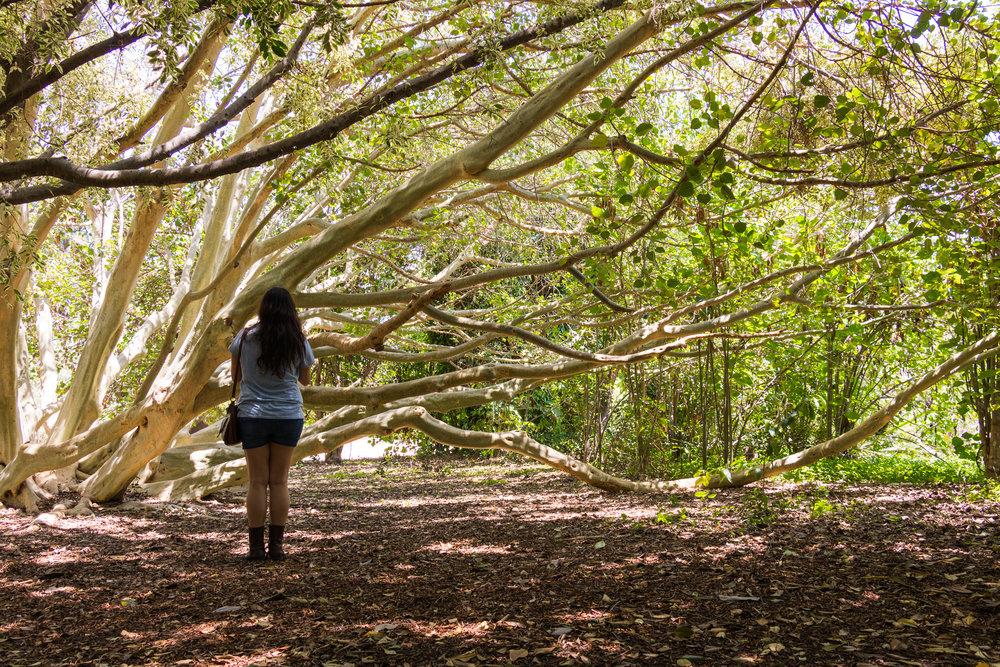fullerton arboretum (60 of 77).jpg