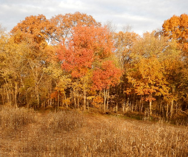 A beautiful fall day. I spotted the largest buck of the hunt back in the trees about 30 yards.
