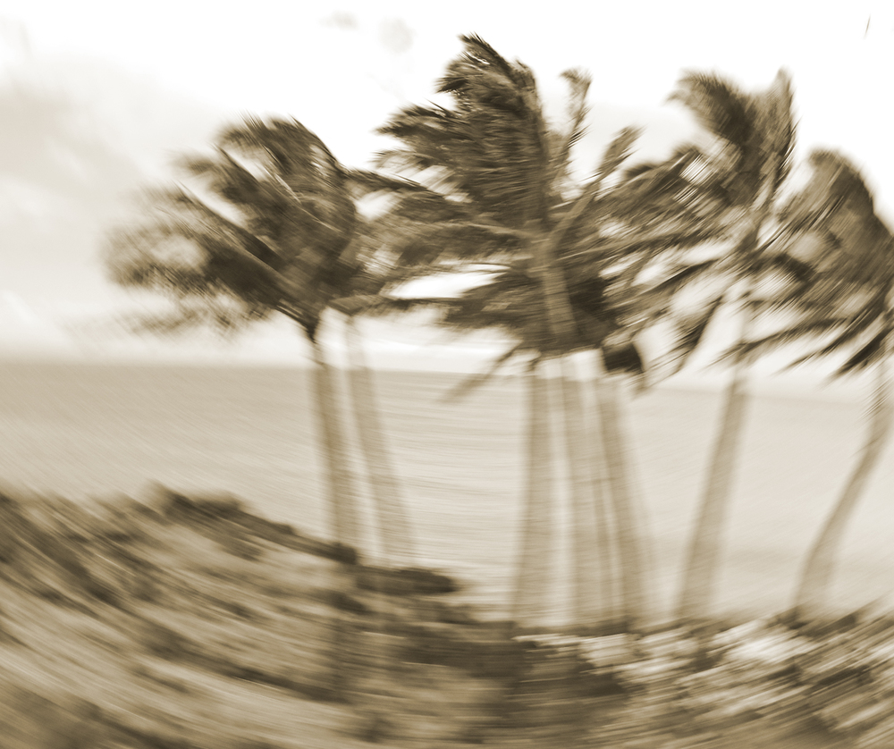 Palms blowing.jpg