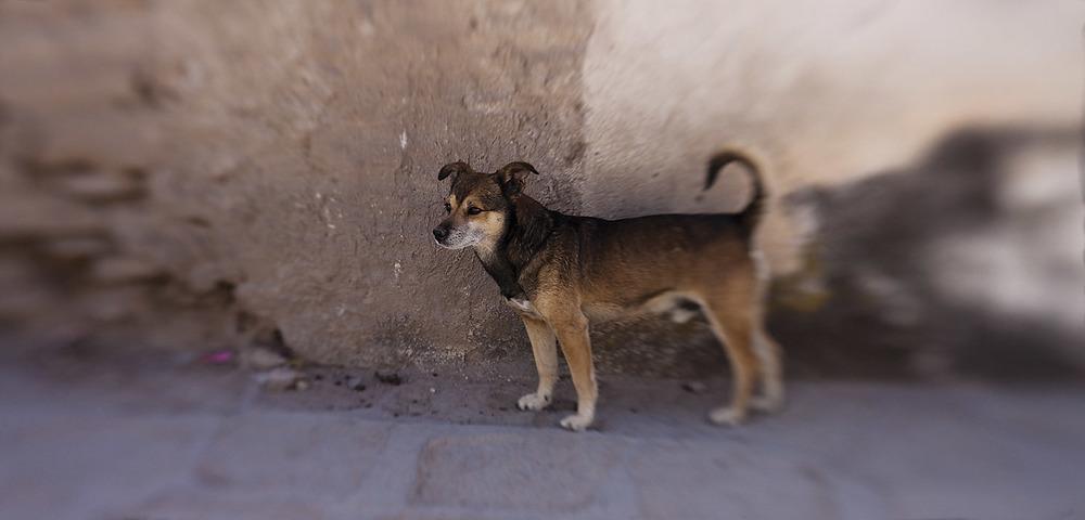 dog.1.jpg