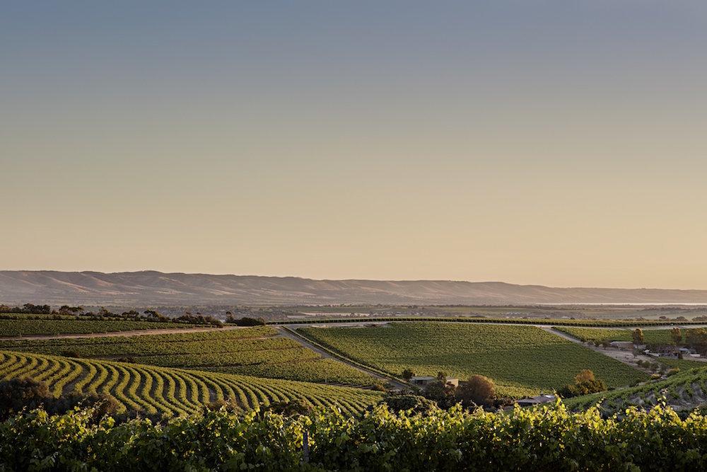 McLaren Vale vineyard sunset copy.jpg