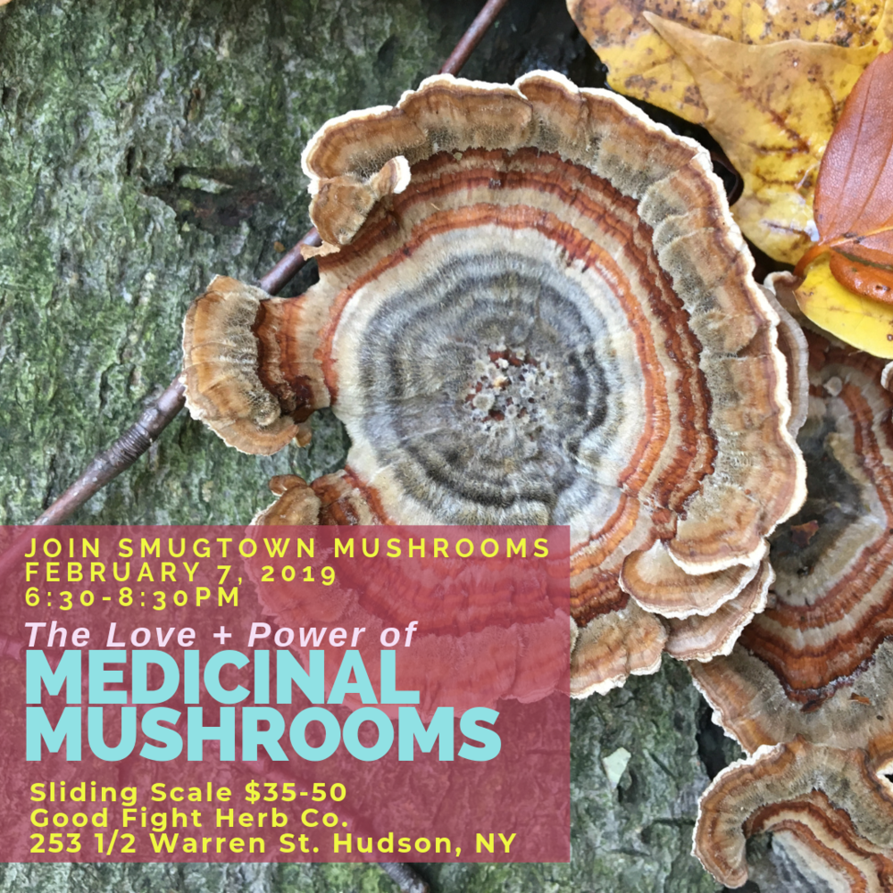 please RSVP to goodfightherbco@gmail.com to reserve your spot as class size is limited XO     The Love + Power of Medicinal Mushrooms:    Journey through the complex web & ancient world of medicinal mushrooms. Explore how they grow in nature then, how they nurture us in return. We will discuss the deep history humans have with medicinal mushrooms & their power to heal. Identifying uses, and ways to prepare them. We will focus on their constituents and the diversity of properties within just a few selected varieties. Mushrooms are known for forging our immune systems, circulation, anti-inflammation responses & more. Join us this evening to journey through just a handful of medicinal mushrooms that grow locally in the wild, that we can even incorporate in our growing practices to lessen the impact of wild-crafting. Lets cultivate a working, sustainable relationship with them in our health care. Raising awareness of the growing market for these healers and what it means for us to do our part to grow our own, and explore the ethics of this huge growing industry. All attendees will enjoy sipping on long brewed Chaga tea and take home some dried Reishi mushrooms to begin your partnership with these healers.     Olga Tzogas created & operates      Smugtown Mushrooms      in Rochester NY. Her journey with Fungi and plants started over ten years ago. Working with these allies by foraging in both urban & more wild settings, and developing skills to identify for food and medicine. In 2011, Smugtown Mushrooms was established because there was a need for mushrooms & growing supplies, workshops, events & community based science in her area. While continuously learning more and embracing the never-ending, unlocked potential of mushrooms & fungi. Olga teaches workshops throughout the continent about wild mushroom identification, medicinal mushrooms, biology, and mushroom cultivation. She was a core organizer for the 2016 Radical Mycology Convergence, the MycoSymbiotics Festival from 2015-17 and helped establish the first ever New Moon Mycology Summit in 2018.
