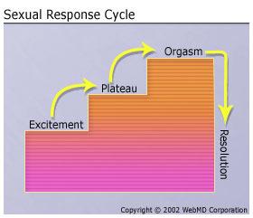 Masters & Johnson Sexual Response Cycle
