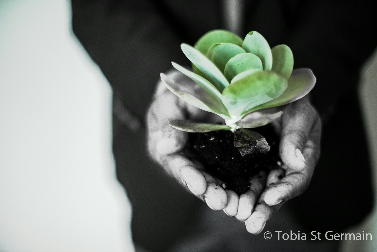 Cultivate your Soul—Tobia St Germain
