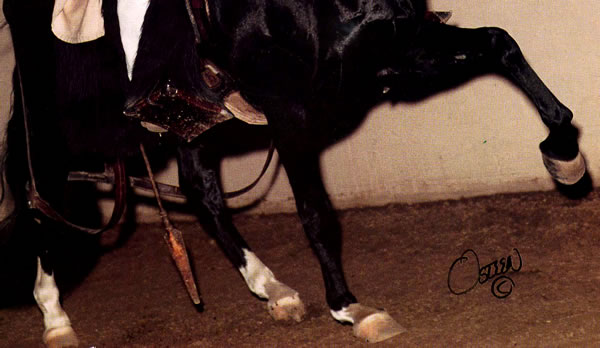Notice this horse is walking on tendons and bulbs.