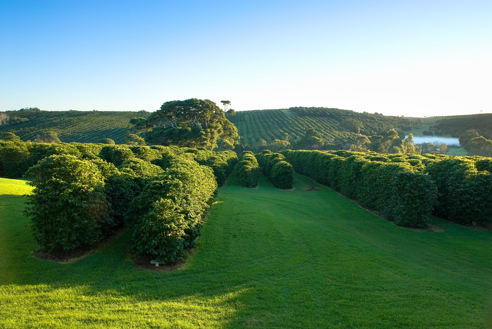 The stunning Zentveld's plantation in the Byron Bay hinterland.