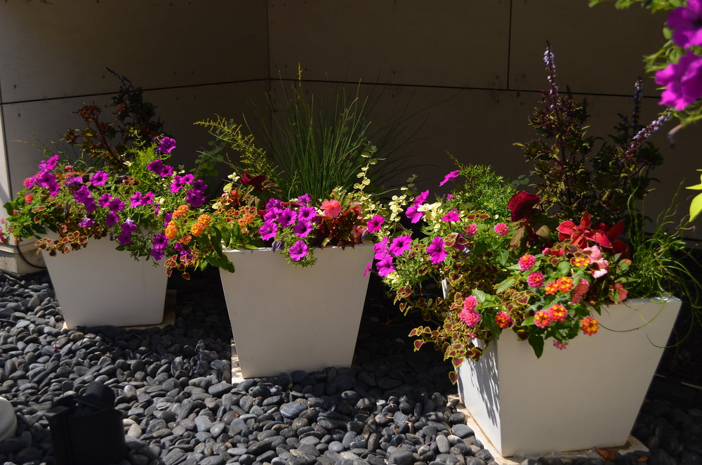 allen summer containers (2 of 2).JPG