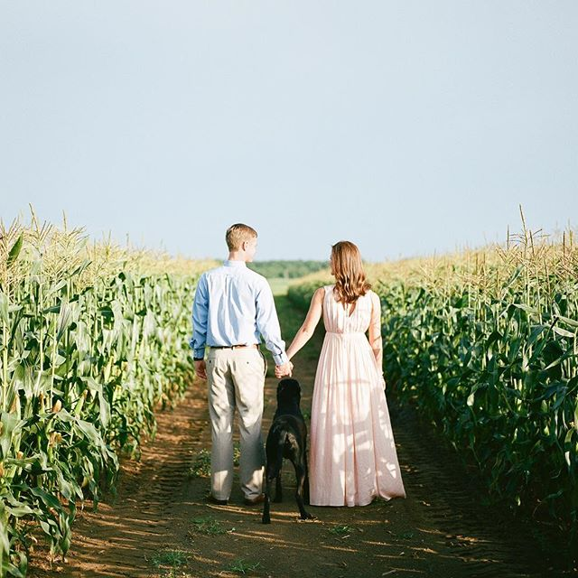 When your daddy grows the best corn in South Carolina, you take your engagement photos in your own corn fields. I'm so glad Sarah and Alex chose a location so close to their hearts, and included their pup Mugsey!! 💞  Hair by @hairandmakeupbyrebekah // Makeup by @laynebartermakeup // Film development by @biggscamera // @kodak film from @filmsupplyclub
