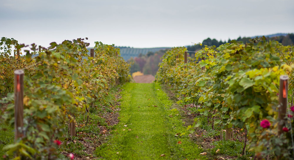 Nostrano Vineyards