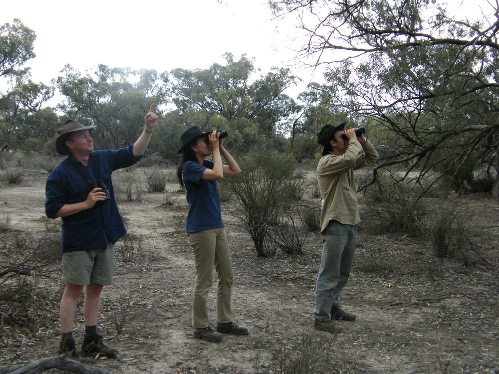 birdsurveys