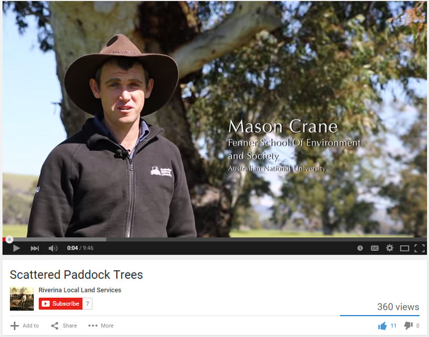 See Mason explain the importance of scattered paddock trees in a Riverina LLS clip.