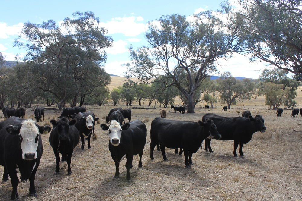 The Grazing Study investigates the effect of livestock grazing intensity and timing on farm biodiversity