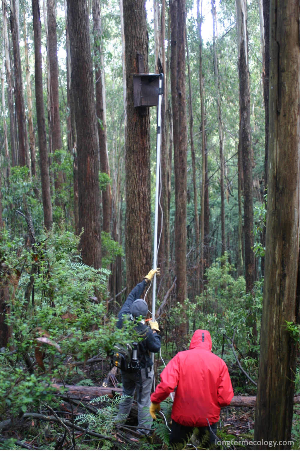 Mason Crane checks a nestbox with an inspection camera in the Victorian Central Highlands