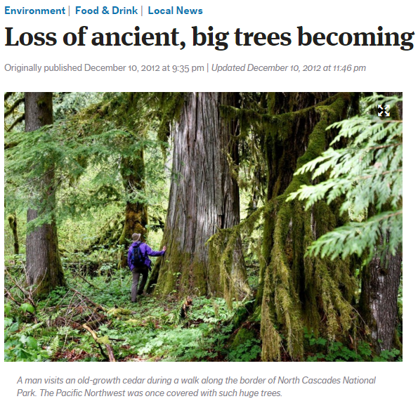 'Loss of ancient big trees becoming a global issue' The Seattle Times, 10 December 2012