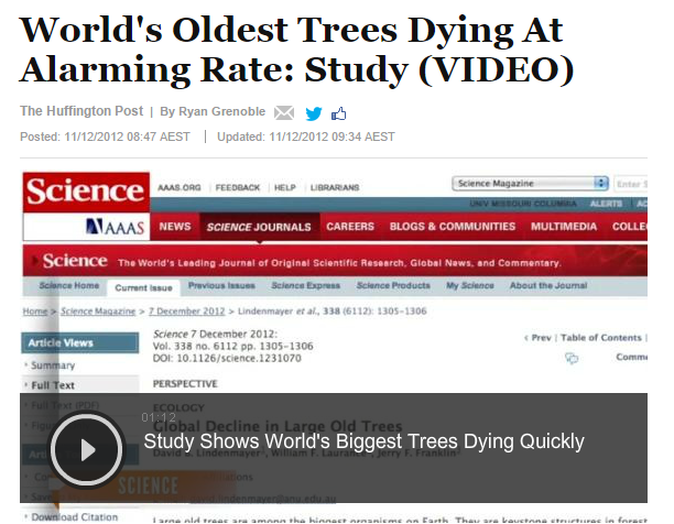 'World's oldest trees dying at an alarming rate' The Huffington Post, 10 December 2012