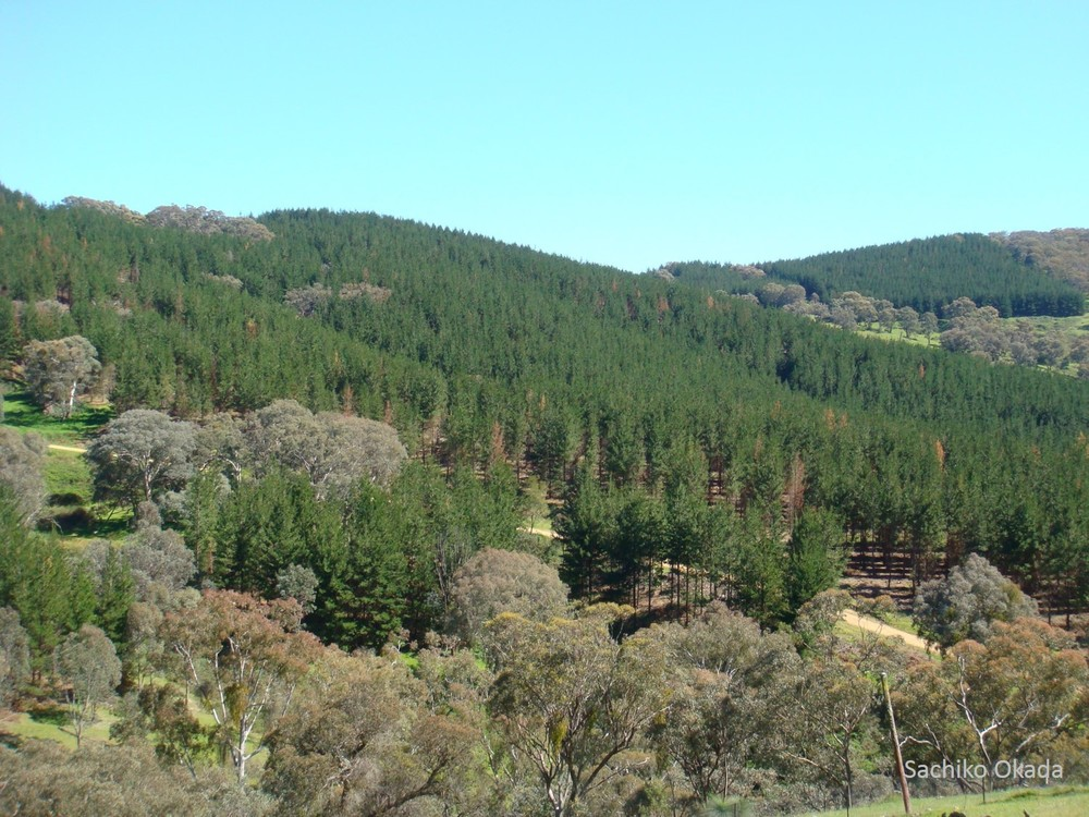 The Nanangroe study provided an opportunity to investigate landscape changes following the establishment of a new pine plantation.