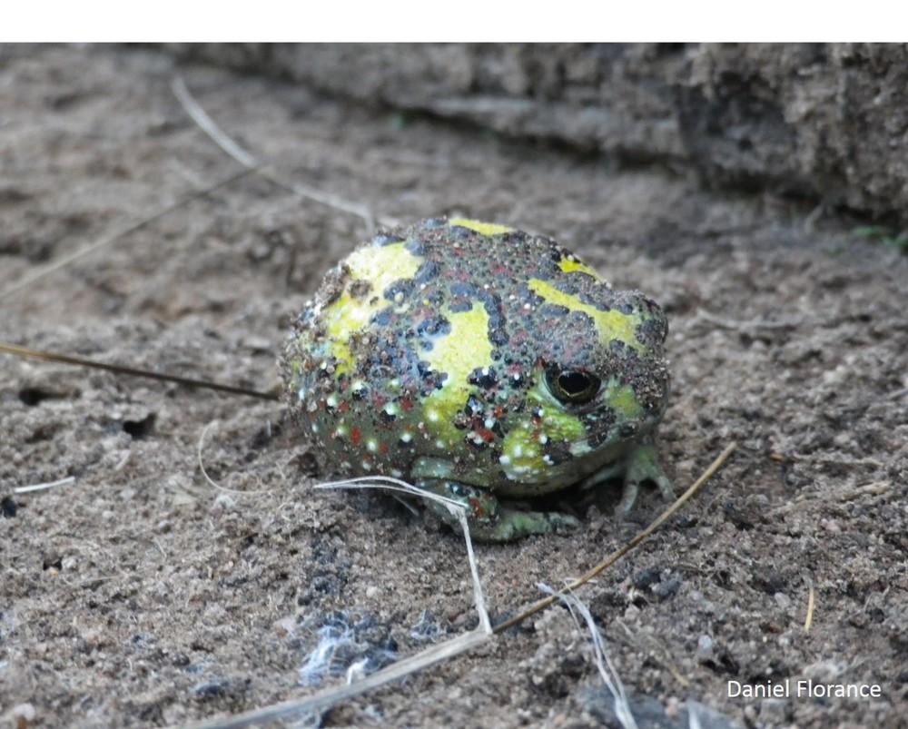 holy cross frog WM jpg.jpg