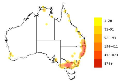 The Brush-tailed Phascogale has a wide and patchy distribution. Map based on records, Atlas of Living Australia (   Atlas of Living Australia     http://bie.ala.org.au/species/Phascogale+tapoatafa . Accessed 26 February 2016)