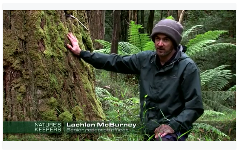 Watch as a documentary team from 'Nature's Keepers' follow Lachie McBurney into the heart of the tall ash forests. Learn about the tree ecology, our monitoring techniques and the threats that face the forest (November 2015).