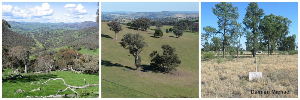 Over a 12 year period, we surveyed reptiles in three topographically different regions in southern New South Wales. From left to right: Nanangroe property, South West Slopes bioregion and Riverina bioregion.
