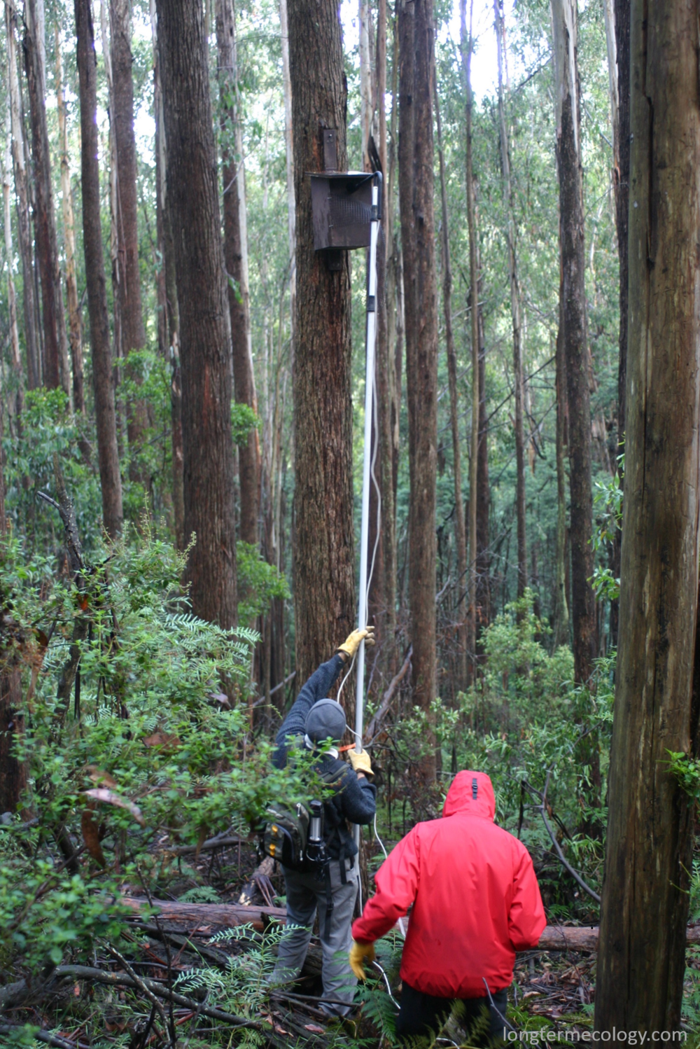 During a large nest box study in the 1990's, researchers could take more than two weeks to check all 96 monitored nest boxes.