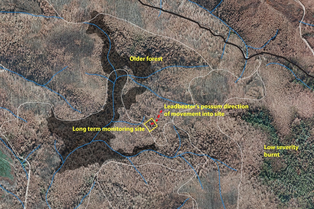 The Ash forests of the central highlands of Victoria are covered with complex layers of fire history. This map shows that although the majority of the area around the monitoring site was severely burnt in the 2009 Black Saturday fires, there are areas of older forest and lower severity burns close to the monitoring site.