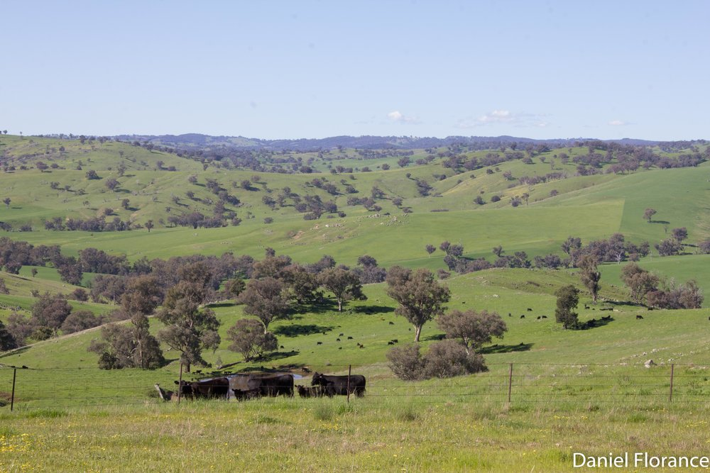 Cowra in Spring