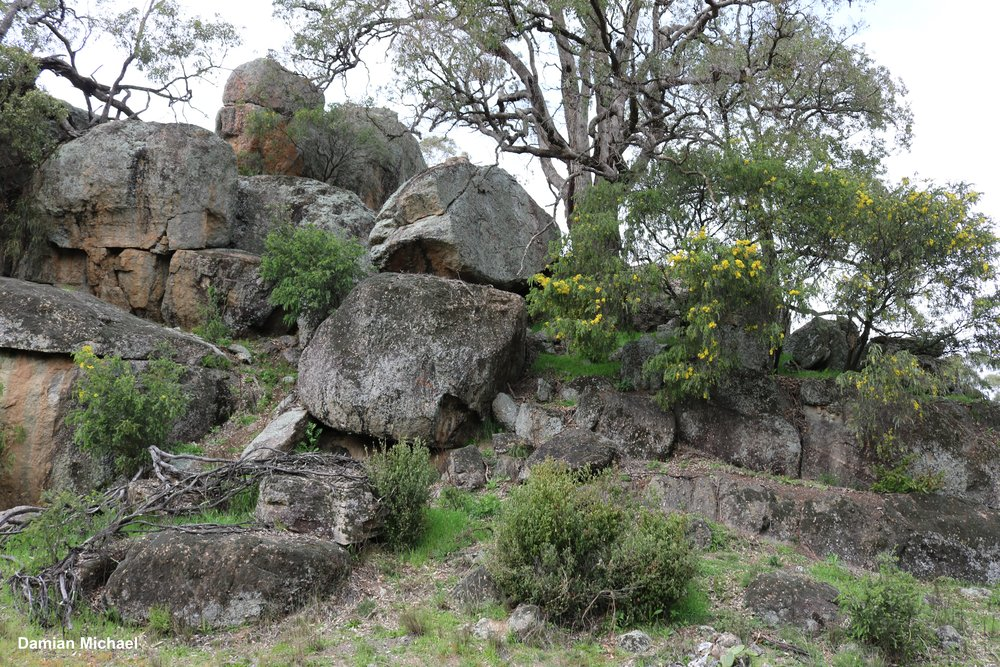 A good example of a rocky outcrop that has been excluded from land clearing and heavy grazing which has allowed native trees and shrubs to regenerate.