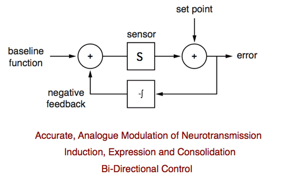 Homeostatic signaling systems are built upon feedback control. A simplistic signaling system is diagrammed to illustrate how much remains to be learned. Baseline neural function is detected by a sensor. The information from the sensor is compared to the cell set point, which is genomically defined. If the sensor and set point differ, an error signal is produced, integrated over time and fed back into the system as negative feedback. If the error is offset to zero, perfect homeostasis is achieved. We do not know the nature of a true sensor for neural activity, nor do we know how this information is communicated to a genomically defined set point. Therefore, the chemical identity of the error signal and the nature of signal integration remain unknown. Ultimately, cellular and molecular mechanisms must be able to explain the concepts defined in red. Recent work has highlighted the first mechanisms responsible for the bi-directional control of neurotransmission (Gavino et al., 2015).  Additional work has defined mechanisms for the analogue control of presynaptic release (Younger et al., 2013). We have begun to define the intercellular signaling systems that achieve homeostatic communication between cells in the nervous system (Wang et al., 2014; Harris et al., 2015).