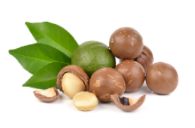 Green and ripened macadamia nuts.