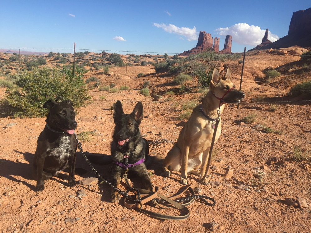 Ninja, Iorek, and Aegis, Monument Valley, AZ