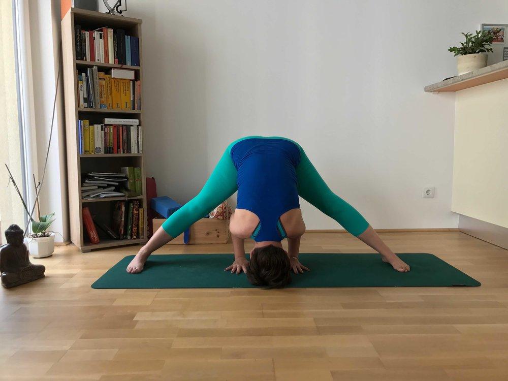 #PrasaritaPadottanasana #disawistories #yoga #meineyogazeit