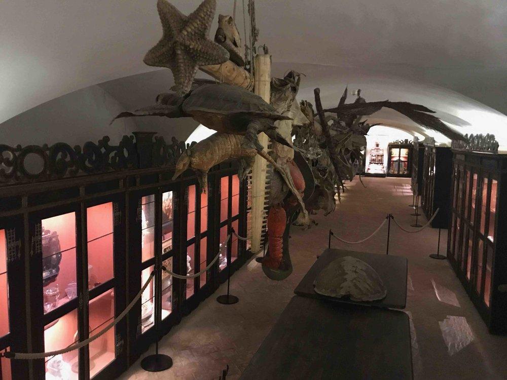 #SchlossForchtenstein #esterhazy #schatzkammer #totetiere.jpg
