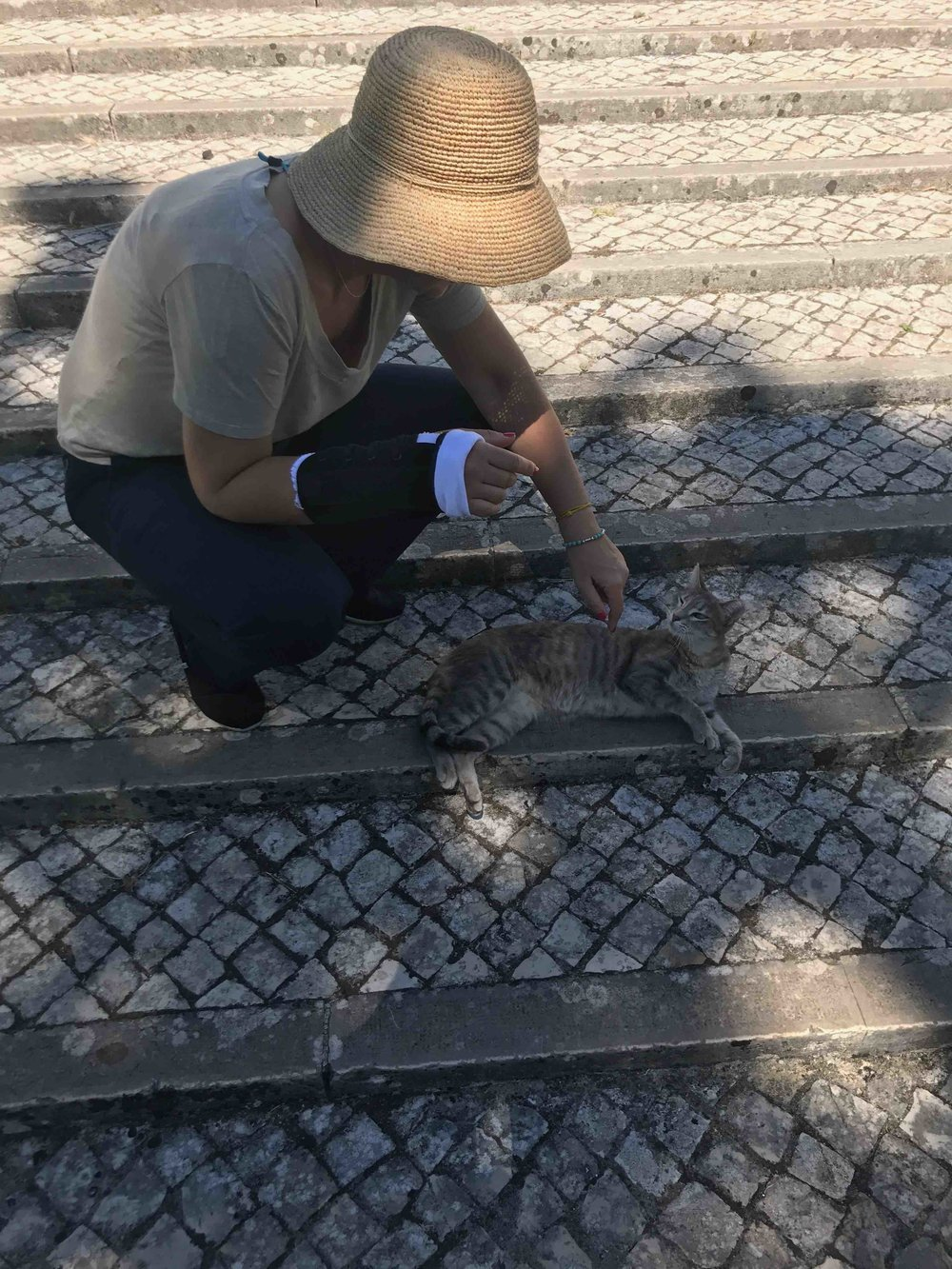 #lissabon #disawistories #jardimbotanicotropical #katze.jpg