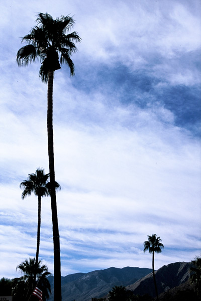 13_f1010032-palm-springs-palms-n-that-pjm-goon.jpg