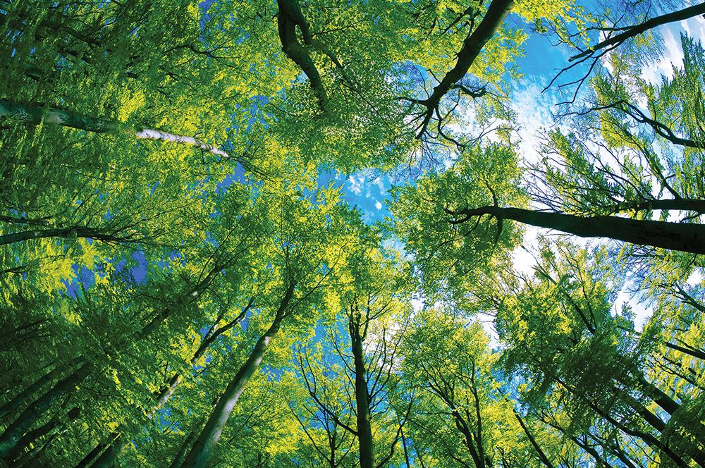 PRB0718_Langelo_Tree1.jpg