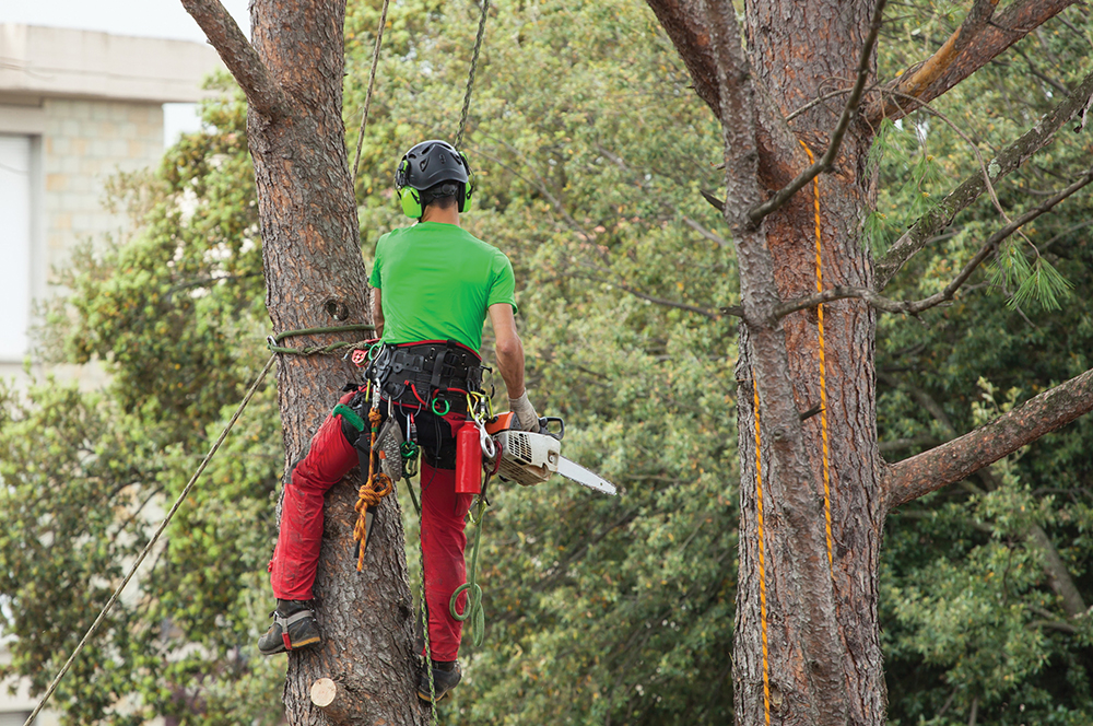 PRB0718_Langelo_Tree2.jpg