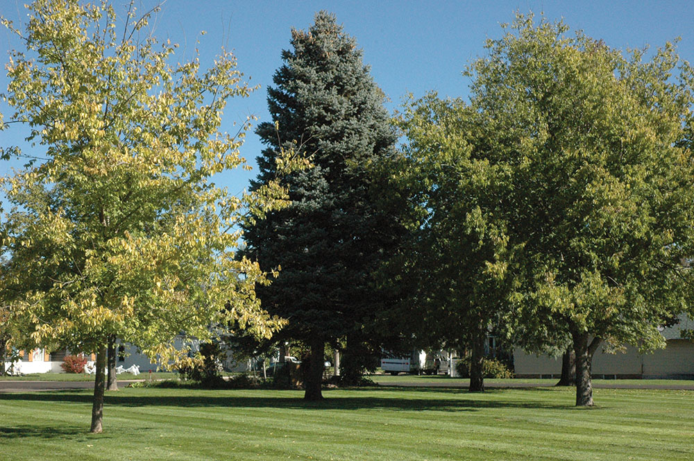PRB0319_Langelo_Trees2.jpg