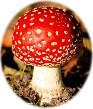 A real mushroom