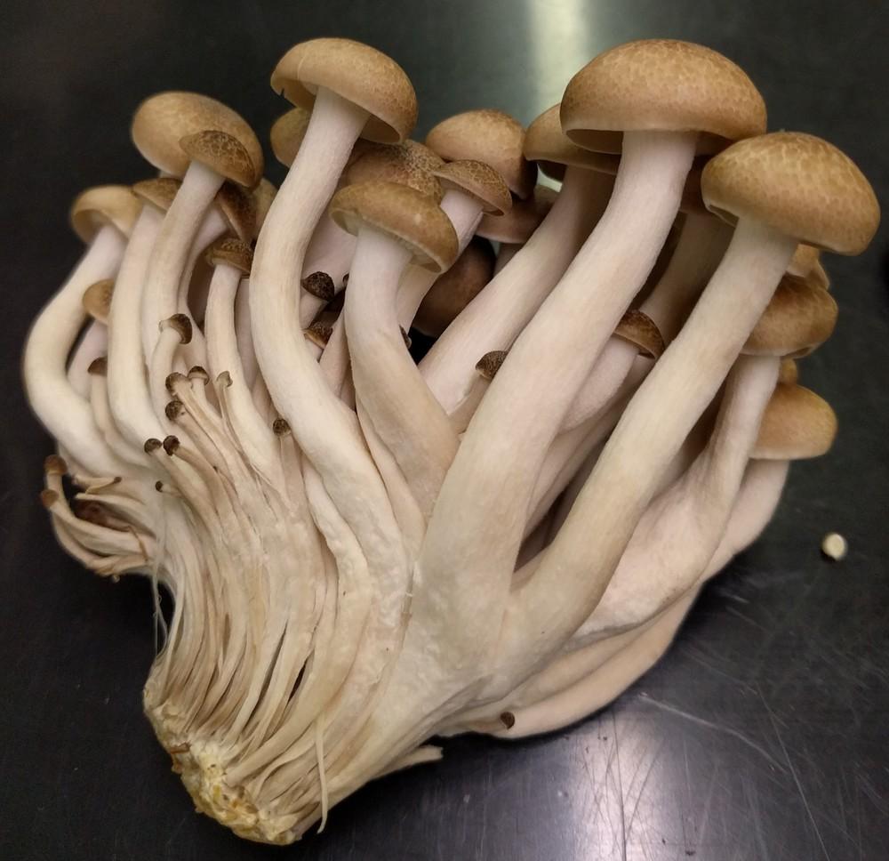 specimen_4.jpg