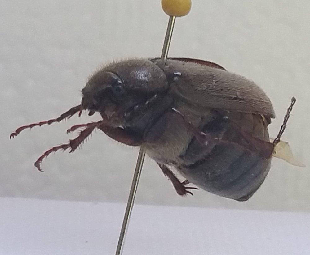 Bug #2