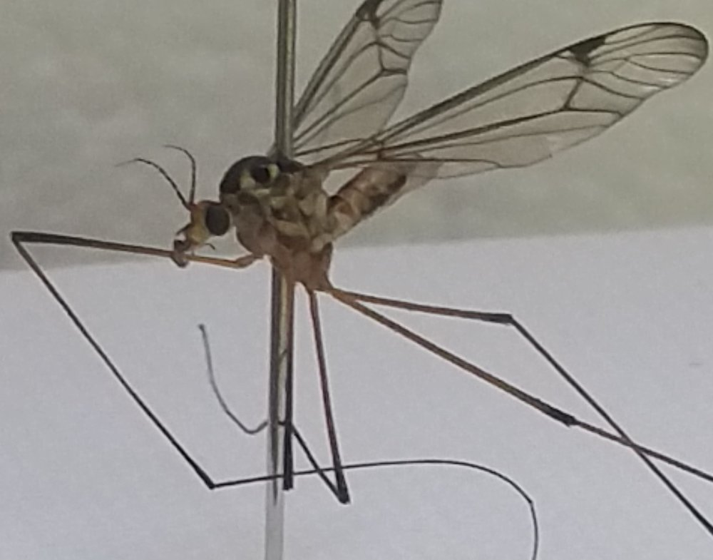 Bug #5
