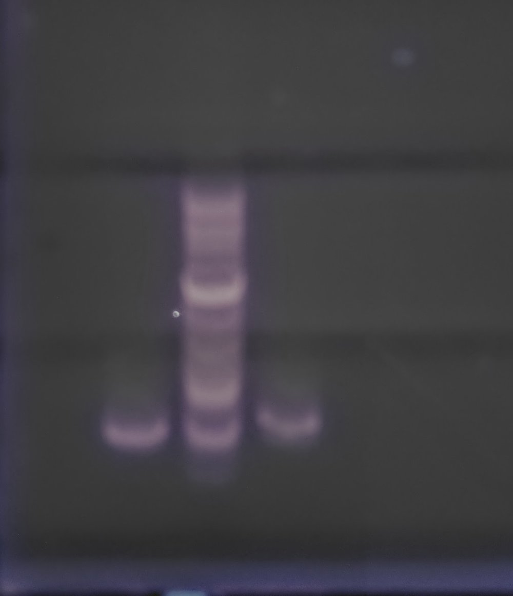 Will's PCR