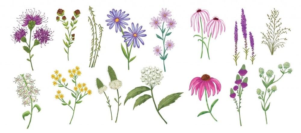 WildflowersB