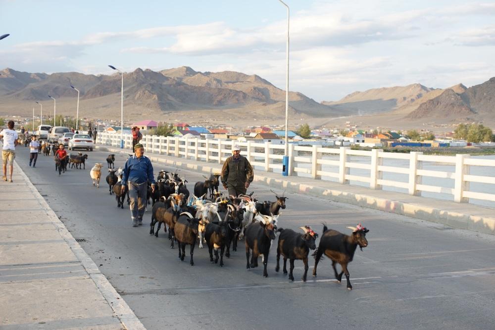 Cabrinhas ceuzam a ponte do rio Khvod
