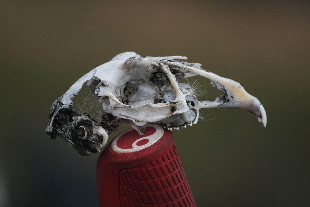 skull ergon
