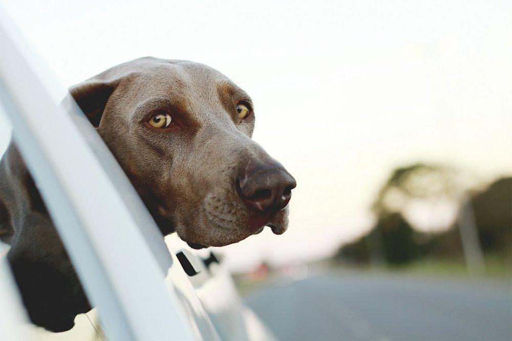 viajar con perro (1).jpg
