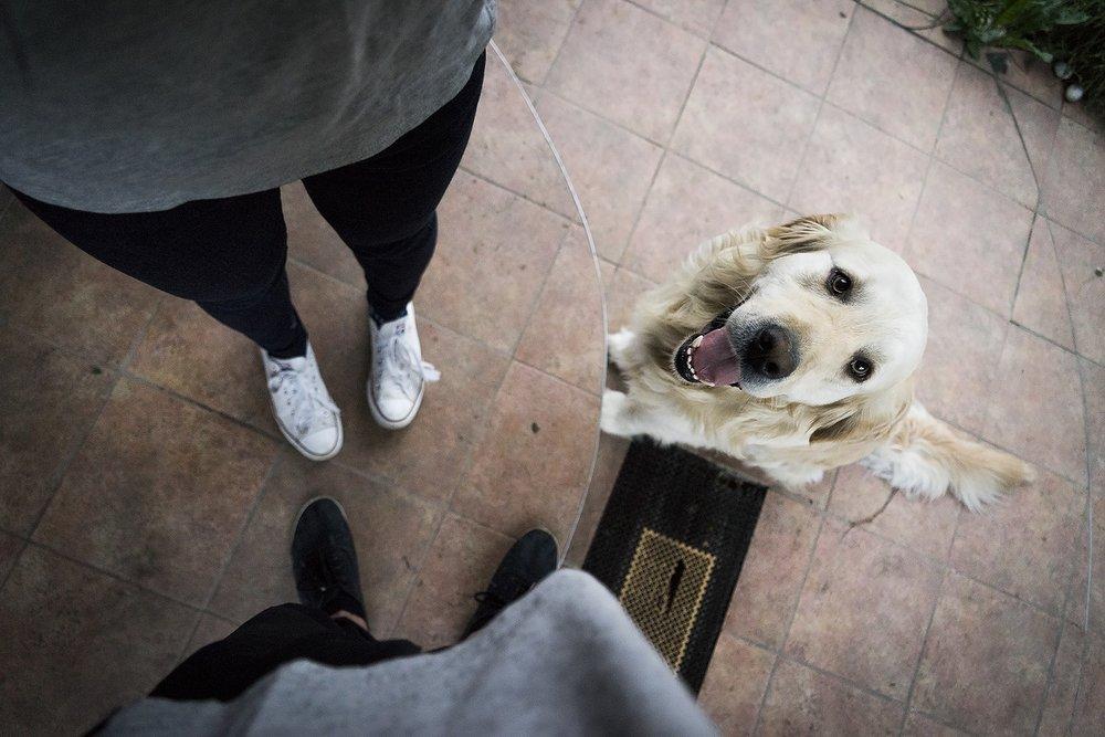 custodia-mascota